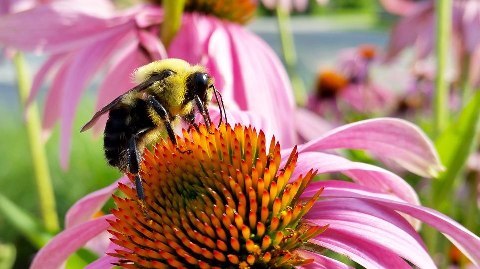 一隻蜜蜂的死(圖)