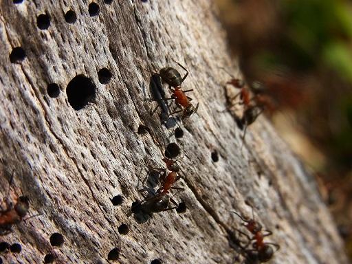 腐蝕心靈的小白蟻